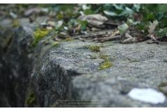 BAR-SUR-SEINE_123_Photos_JGW