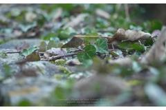 BAR-SUR-SEINE_124_Photos_JGW
